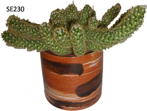 Cactus Plant  SE230