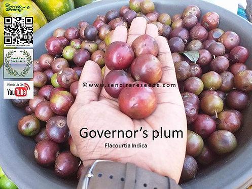 "Flacourtia indica fresh seeds, ramontchi, governor's plum, batoko plum ""senci rare seeds area"""