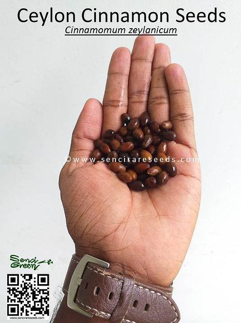 Ceylon cinnamon seeds (©www.sencirareseeds.com)