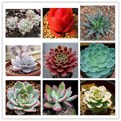 SE006 Mix succulents seeds