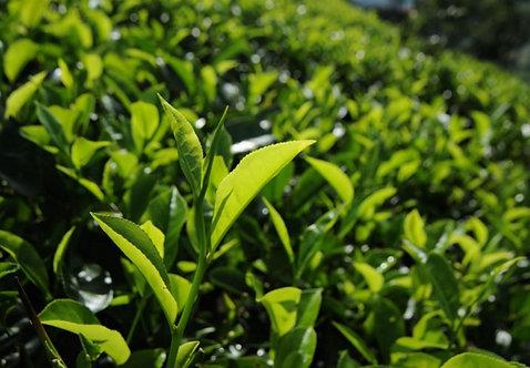 Lipton Ceylonta Pure Srilanka BOPF Tea 100g 200g 400g 500g Packets