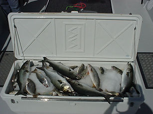 Chesapeake Fishing Charters