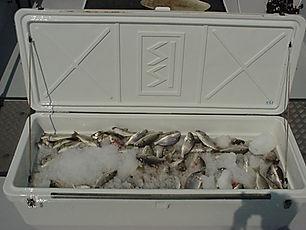 Chesapeake Fishing Charters
