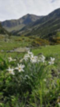 Grandallas observadas durante el paseo con el guia de montaña