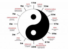 Médecine chinoise : Les organes, indications énergétiques et émotionnelles