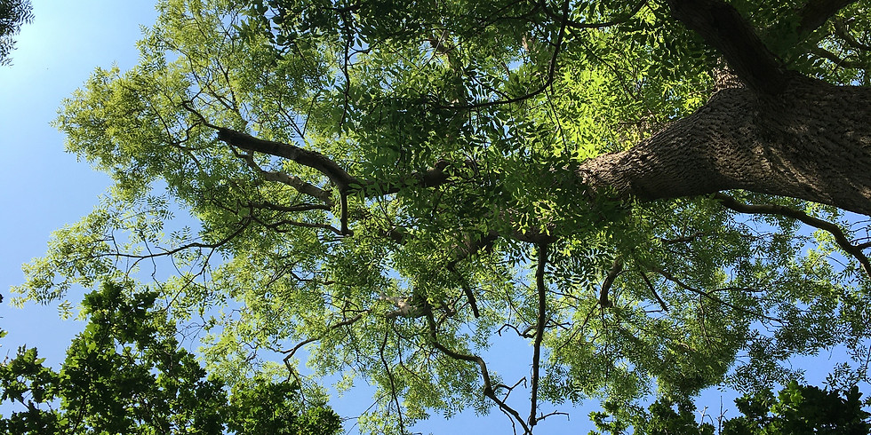 Tree of Life - Yoga Day Retreat - Sunday 26th September