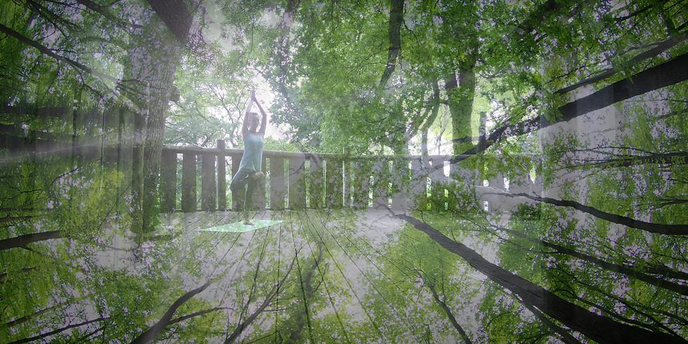 Woodland Yoga Sunday 19th July Morning