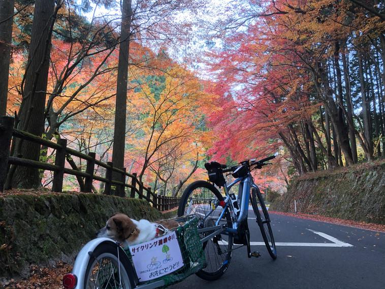 岡山県 鏡野町 奥津渓