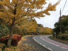 岡山県 蒜山高原 サイクリングロード