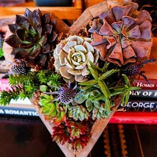 Heart Filled with Succulents! La Tea Da By Ruth Los Angeles