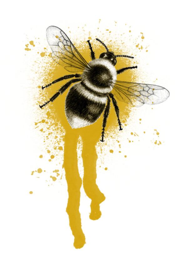 Bee Splat