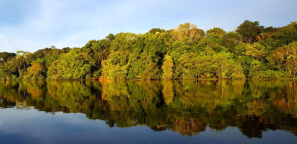 selva-5200663.jpg