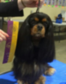BISS GCH Pensrick Ace of Spades - Coco