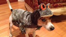 25 Best Dog Costumes - Halloween 2015
