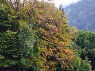 Herbststimmung in Fanas - perfektes Wander-Wetter!