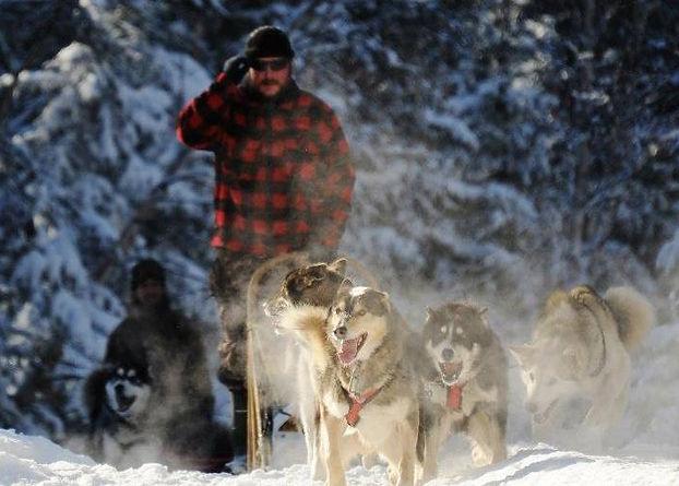 Séjour chien de traineau Laponie