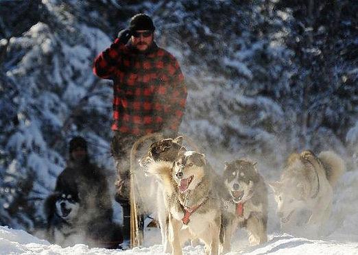 RAID en chiens de traineaux
