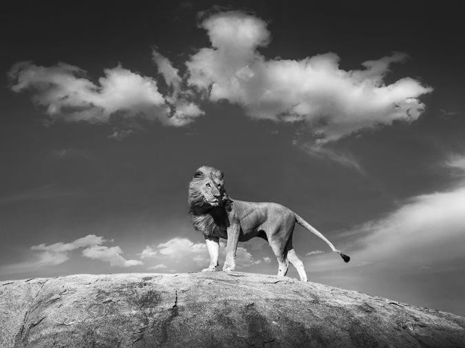 The Lion King - PH: Bjorn Persson