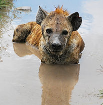 safari tanzania