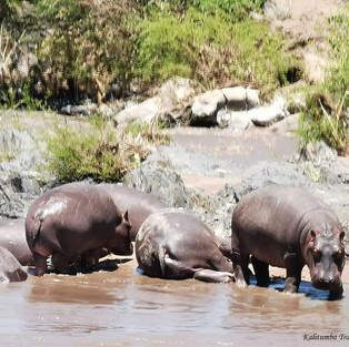 HIPPO'S SPA!