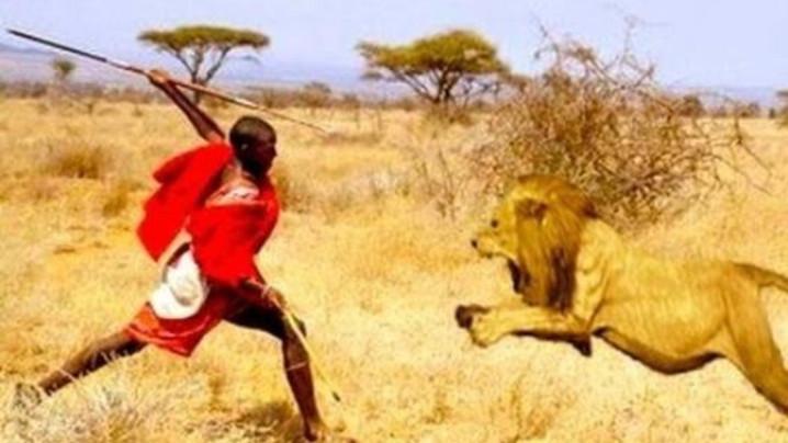 #42 - CURIOSITA'...fiaba africana: IL LEONE INGRATO!!