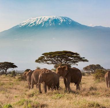 kilimanjaro_edited.jpg