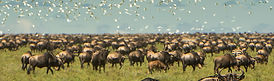 safari tanzania the great migration