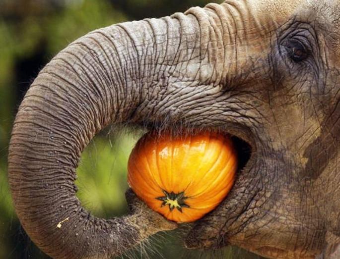 #01 - CURIOSITA'...E i denti degli elefanti?