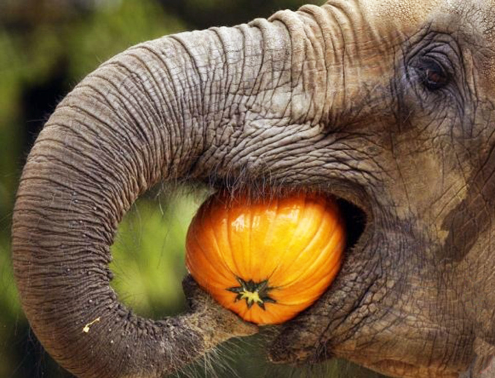 Safari Tanzania - Elefante