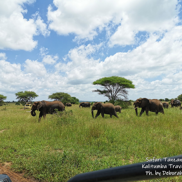 ELEPHANTS ON EXCURSION
