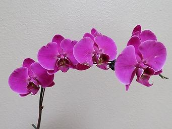 orchid3.jpg