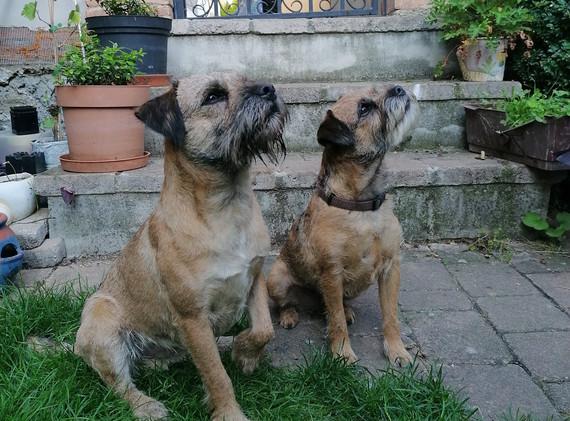 Kiwi & Bessy stolzen Eltern von unseren L-Wurf