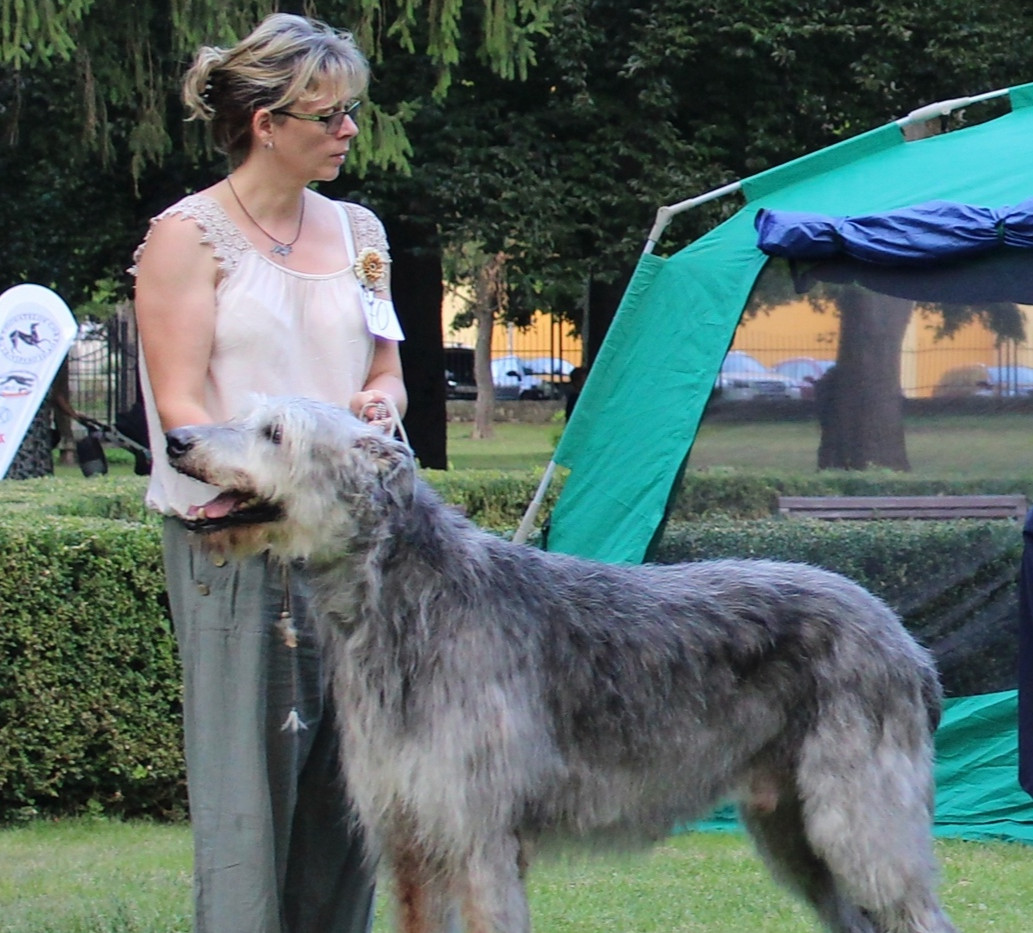 CAC sighthound Club SHOW Mojmirovce SK