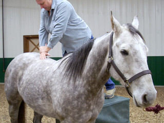 Is your Veterinary Physiotherapist fully qualified?