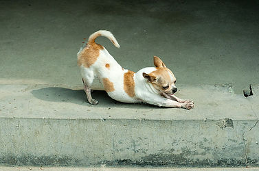 stretching dog