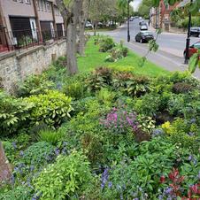 Village shrub beds
