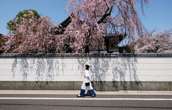 桜画像.jpg