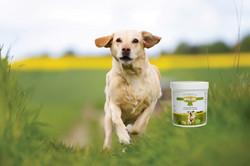 Walkease-Dog-with-Tub
