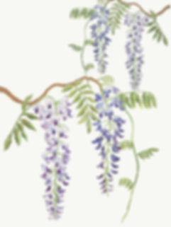 wisteria01.jpg