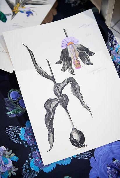 Keiko Nishiyama illustrations
