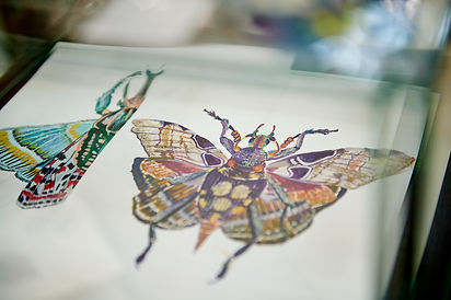 Keiko Nishiyama butterfly illustrations