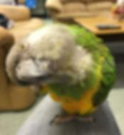 Parrot boarding at Barkers Pet Motel in St. Albert Edmonton
