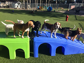Barkers Pet Motel Best Dog Boarding Daycare St. Albert Edmonton Grooming puppy playground