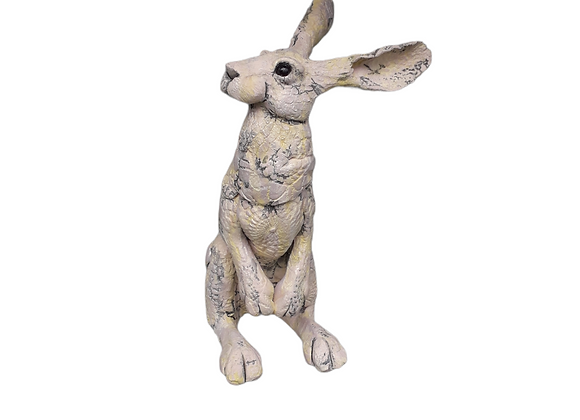 Medium Quirky Hare ref: mqh6