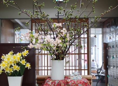 🐤春の訪れ🐤