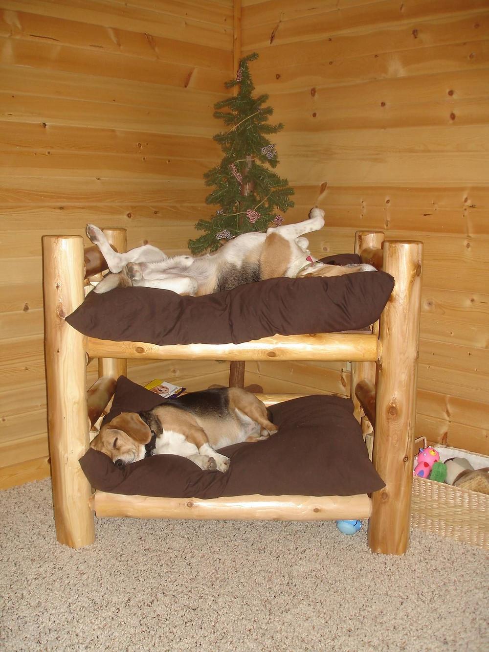 lit jumeaux pour chien - couchag 2 chiens