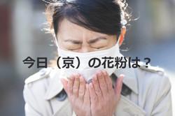 今日(京)の花粉は?