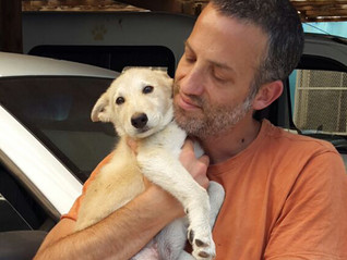 Finding a way to help Mary, a homeless puppy