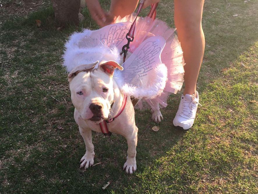 Daisy-Mae at Halloween Walk