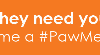Become a #PawMember, please...